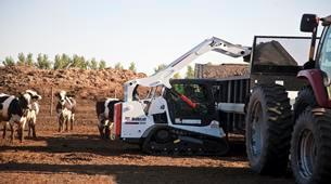 Where to find BOBCAT T590 TRACK SKID STEER in Dallas